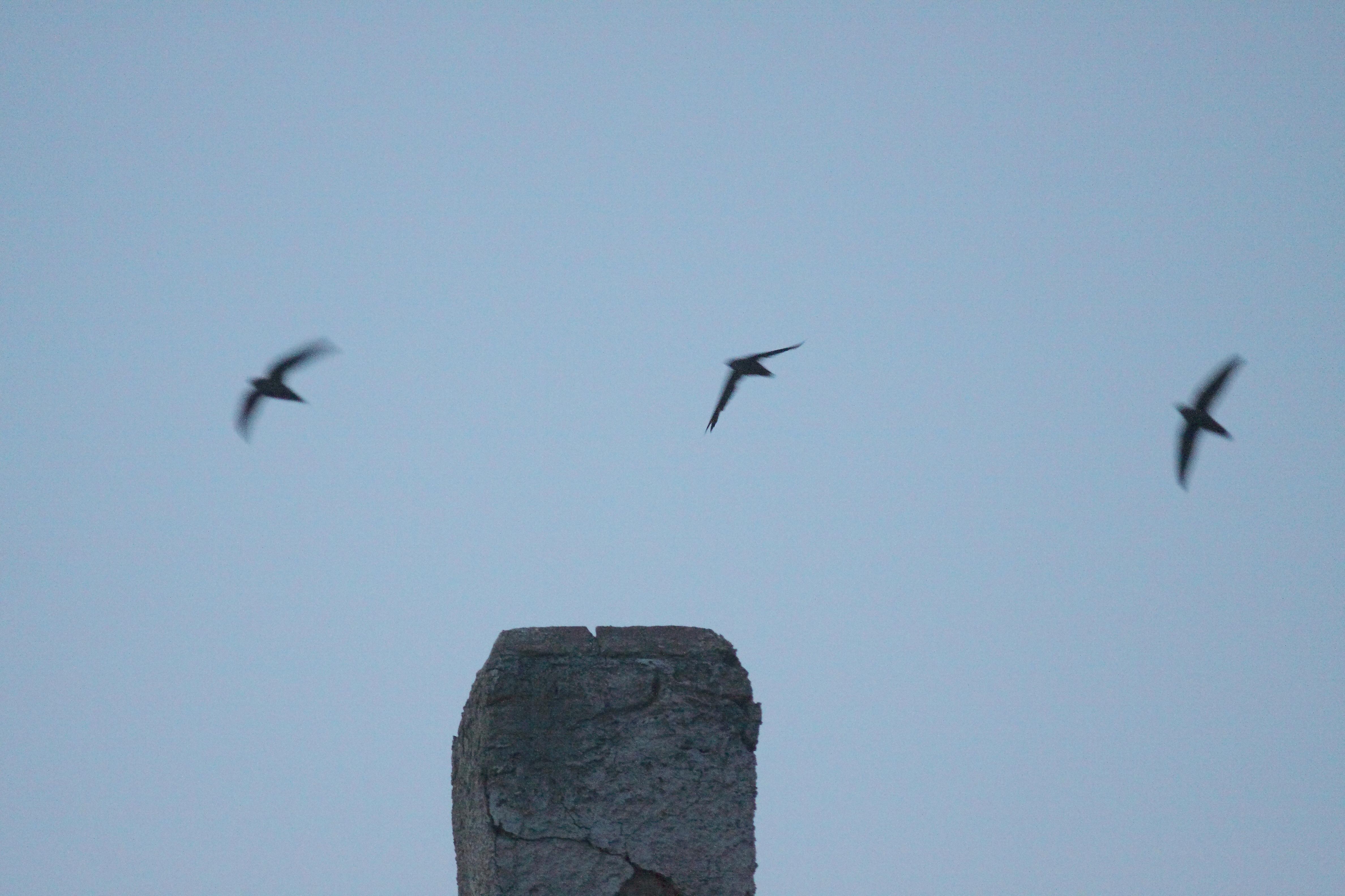 3 CHSW_Hampton chimney_1461_blurred